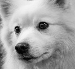 Small Of White Fluffy Dog
