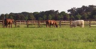 Many People use Horse Anthelmintics