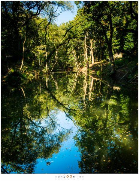 Een zonnige dag. Een open plek in het bos waar een meertje het landschap reflecteert.