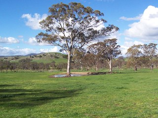 A Paddock, Field or Pasture