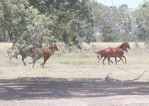 The Land Horses live on Needs to be Healthy, too