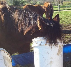 Feeding Horses can be Costly; Check out the Frugal Horsewoman Website!