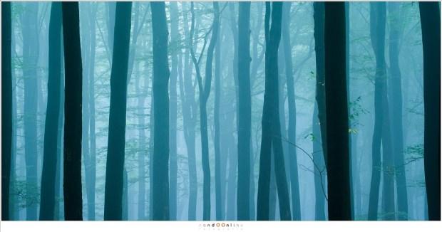 in het blauwe licht van de ochtendschemering wachten de bomen op het eerste licht van de opkomende zon (105mm; ISO400; f/8; t=4sec)