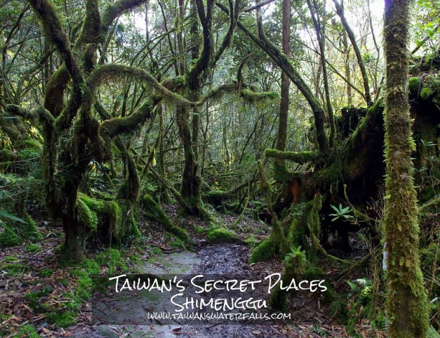 It isn't easy to reach Shimenggu (Taiwan) but you will be rewarded with a waterfall, giant cypress trees, a 500+ meter deep valley, a mossy forest, little pools in the creek and a great trail.