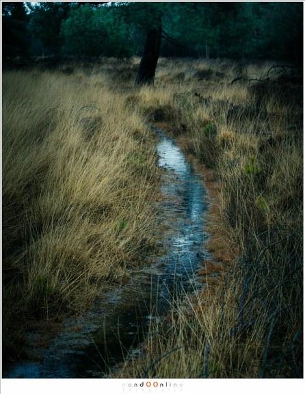 Water, water, water, overal is water. In de lucht, op de grond, tussen de planten.