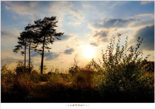 Zonsondergang boven de Strabrechtse Heide. Single exposure shot in RAW formaat, bewerkt in Lightroom. Het laat zien dat de sensor van de Fuji een groot dynamisch bereik aan kan. (ISO200 - f/11 - 1/450sec - Velvia film simulation)