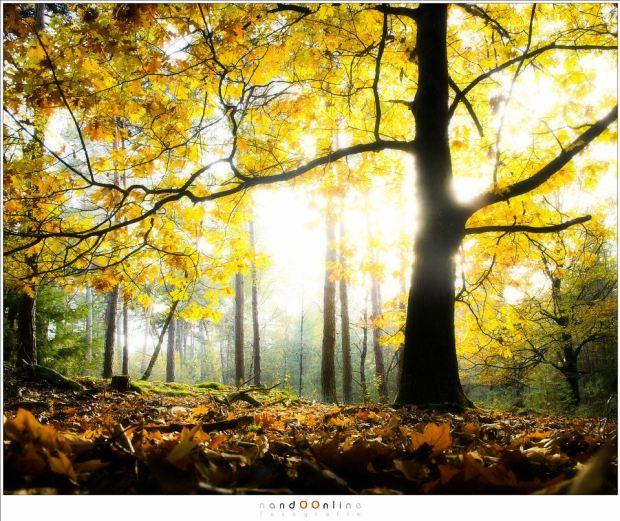 De herfstbladeren aan de boom, klaar om te vallen en lege takken achter te laten. (16mm (equi FF: 24mm); ISO200; f/7,1; t=1/8sec; +2EV)