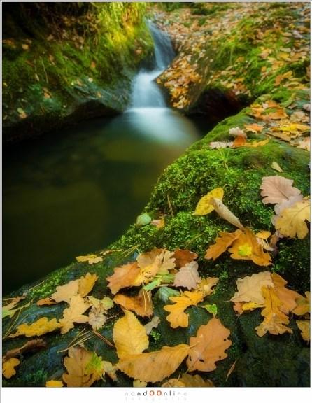 Herfstbladeren van de Ninglinspo (24mm, f/11, ISO100, 20sec)