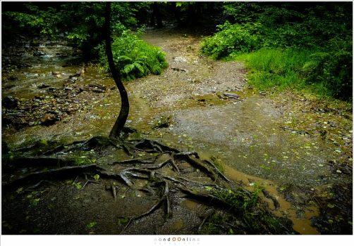 Op sommige plaatsen is het verschil tussen pad en water verdwenen. (18mm - (auto)ISO12800 - f/8 - t=1/120)