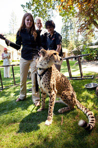Cheetah has his moment in the sun at Auction Napa Valley. Credit: Courtesy of Auction Napa Valley