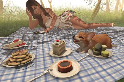 A picnic with Preston