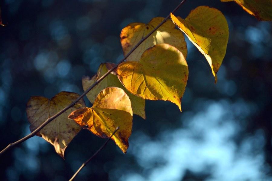 Lakeside in Fall