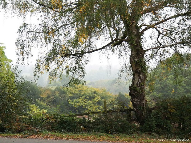 Autumn in the New Forest 2