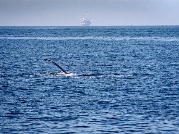 Whale vs. Man