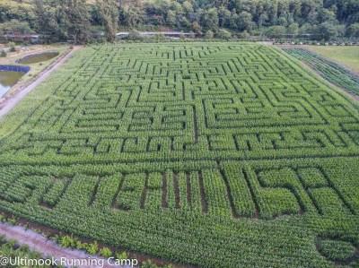 去美国玉米迷宫吧