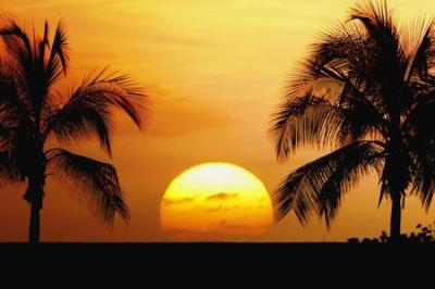 Sun Between The Palm Trees - Sunsets & Nature Background Wallpapers on Desktop Nexus (Image 199959)