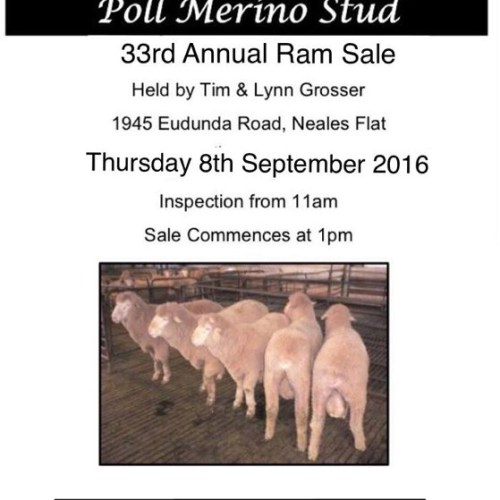 Narcoota Poll Merino Stud - 33rd Annual Ram Sale - 8th Sept 2016