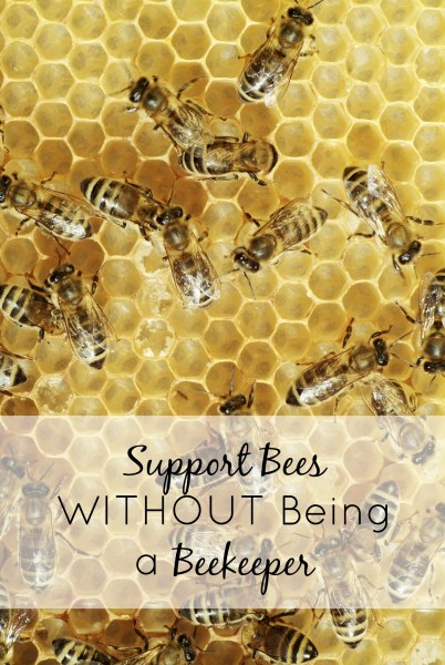 If you want to support the bees, but the beekeeping trend is not for you, check out these five easy ways to support bees WITHOUT being a beekeeper. The sign is my personal favorite.