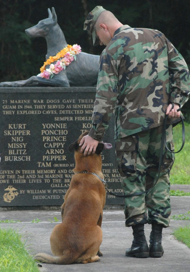 war dog cemetery monument, war dogs, dogs helped capture Osama bin laden