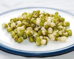 mung-bean-sprouts-camelcsa