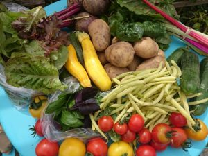 vegbox-contents-camelcsa-050716