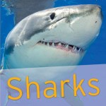 Over 40 detailed shark fact files include information on each species' size, reproduction figures, habitat and locations around the world. • Thrilling shark photography for kids to recognize species.