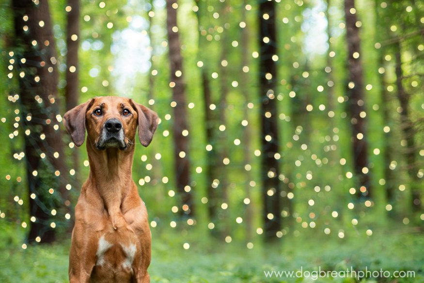dog-breath-photography-kaylee-greer-16-cotw