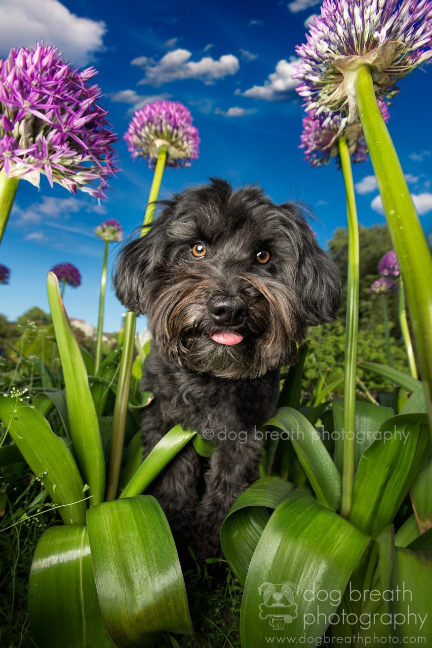 dog-breath-photography-kaylee-greer-38-cotw