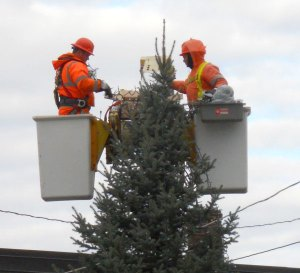 men-working-on-xmas-tree