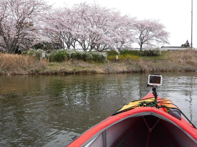 千丈寺湖お花見