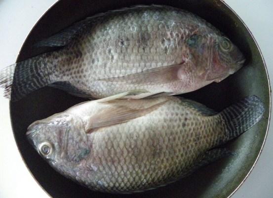 Mojarra Fish