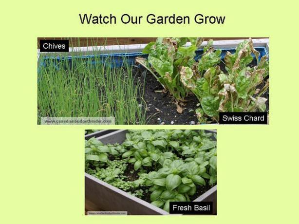 Watch-Our-Garden-Grow-2