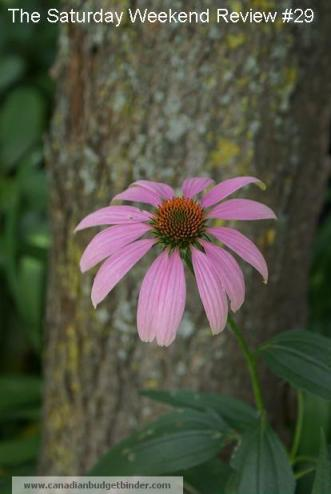 the-saturday-weekend-review-echinacea-2
