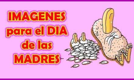 IMAGENES para el DIA de las MADRES, Feliz Dia de las Madres Lindas, Feliz Dia Mamá