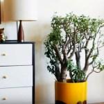 como decorar con plantas naturales