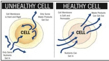 unhealthy cell vs healthy cell