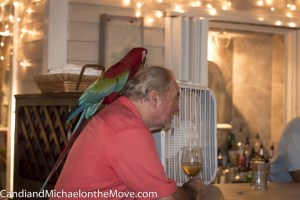 "John and one of his parrots, ""hanging out"" at the bar"