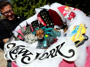 Frida, a chihuahua, appears dressed as New York City during the Tompkins Square Halloween Dog Parade presented by Beggin' Saturday, Oct. 25, 2014 in New York. (Photo by Jason DeCrow/Invision for Beggin'/AP Images)