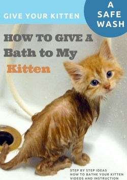 Small Of How To Bathe A Kitten