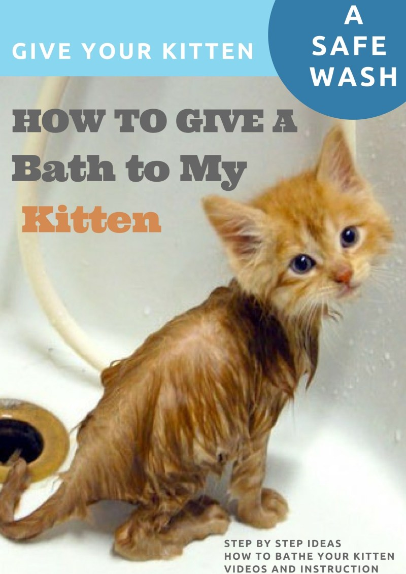 Large Of How To Bathe A Kitten