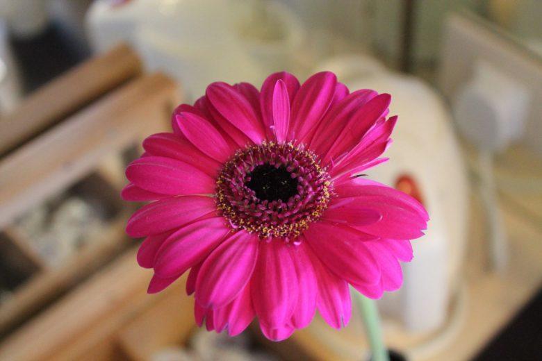 azura ship cabin flower