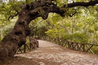 Yıldız Parkı yürüyüş rotası