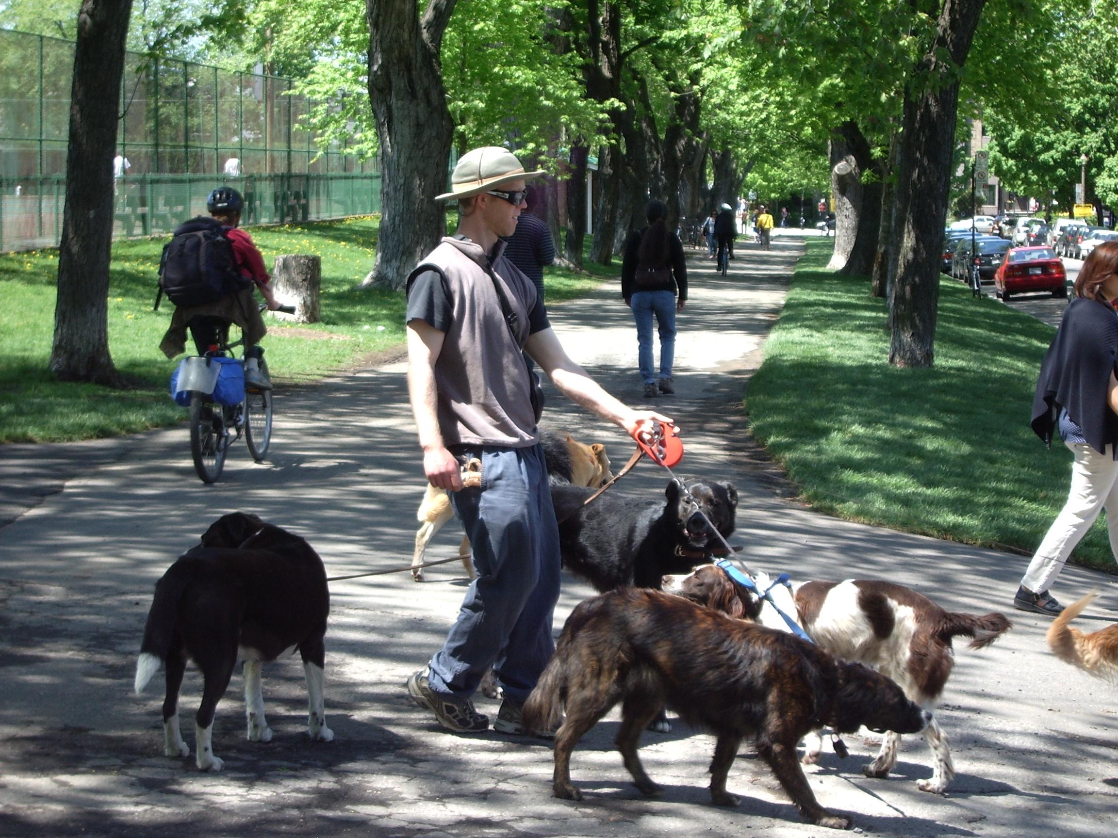 Fullsize Of Dog Trainer Salary