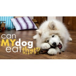 Small Crop Of Dog Cant Catch Food
