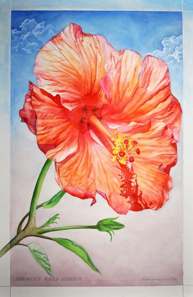 Bonfoey-Mauersberger-Hibiscus Rosa-Sinesis-45x29