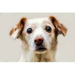 Small Crop Of Staph Infection In Dogs