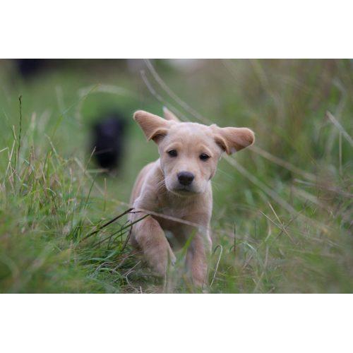 Medium Crop Of Pink Eye In Dogs
