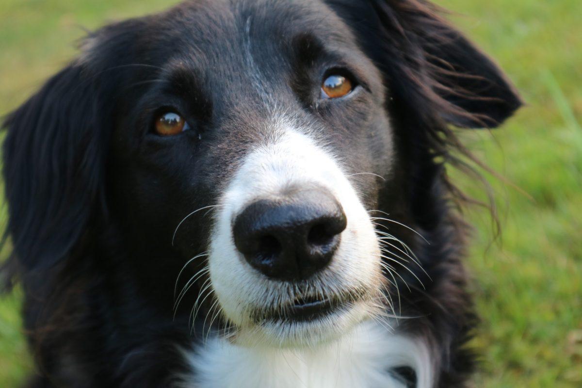 Luxurious Dogs Canna Pet E1504131419246 Heartworm Treatment Without A Vet Heartworm Disease Symptoms bark post Heartworm Medicine Without A Vet