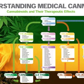 Understanding-Medical-Cannabis-2