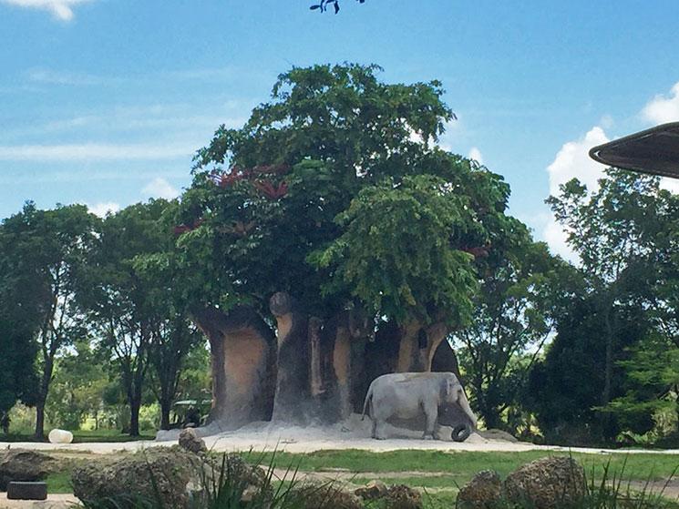 zoo-de-miami-37